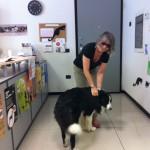 Il cane in ufficio: un anti-stress a 4 zampe