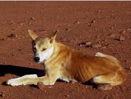 I cani ferali dell'Asia