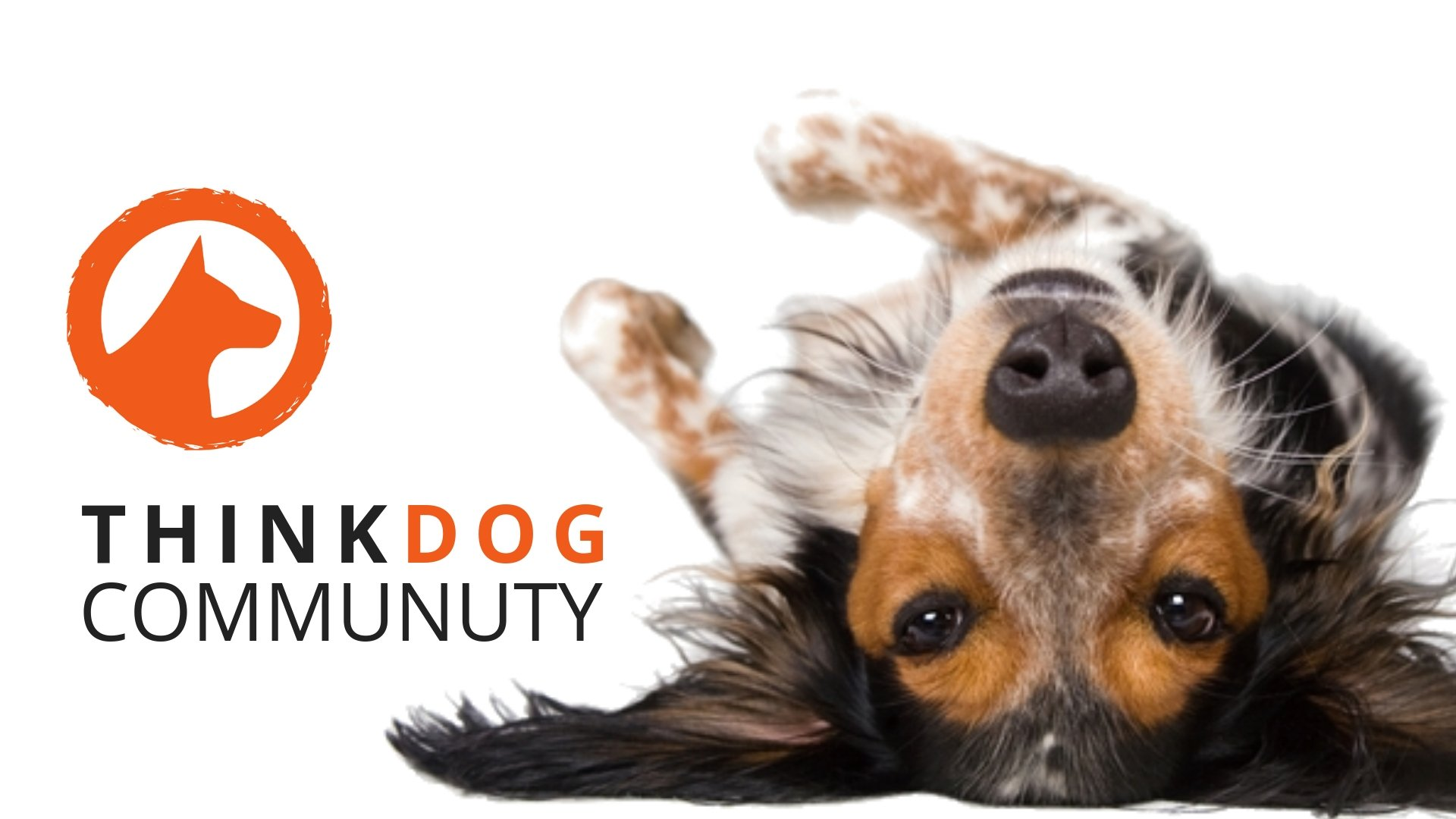 thinkdog community